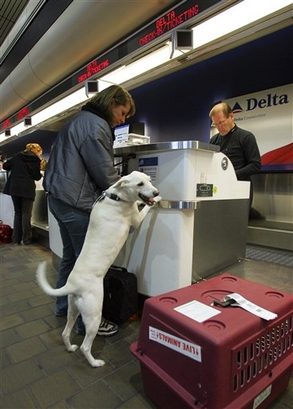 Tara Zimmerman, left, of New York, and her dog Pablo check-in ...