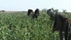 US policy shift on Afghan poppy farms