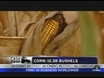 USDA Expects More Corn, Soybean Production