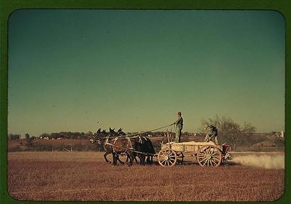 c. 1940: Georgia oat field? Southern U.S. (Photo: ...