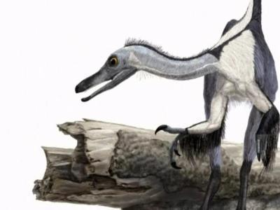 China finds bird-linked dinosaur