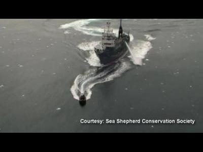 Activists clash with whalers at sea