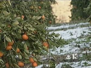 Freezing Temps Threatening Crops Again