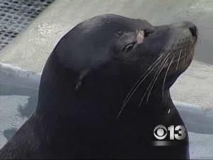 Experts: Sea Lion Has 50-50 Chance Of Survival