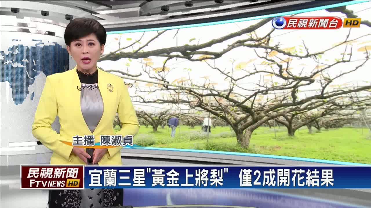 日夜溫差大?宜蘭「黃金上將梨」僅2成開花結果