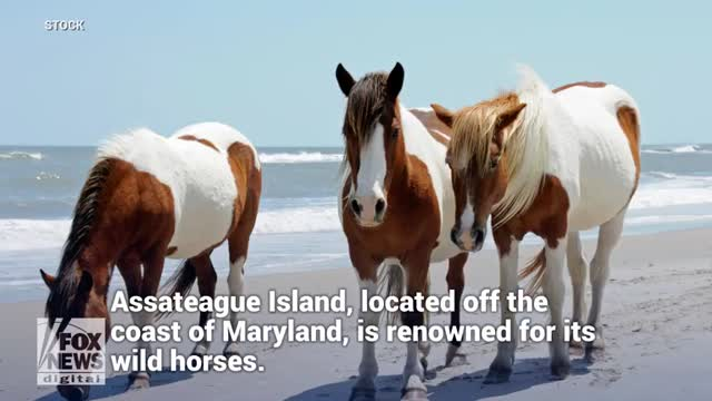 Horse kicks man in groin at popular Maryland beach