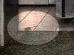 i-CAUGHT: Mice Check Out Yogurt Shop