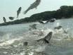 Jumping Fish Hop and Hurt