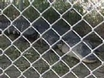 Basement Gator Gets New Home