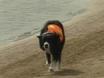 Dog Duty: Chasing Seagulls