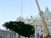 Pope's Christmas Tree Arrives at Vatican
