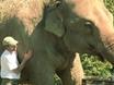 Psychotic Elephants