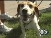 6/9: Healthy Pets - Overheating