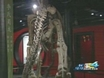 """Dinosaurs of China"" Exhibit Opens At The Miami Science Museum"