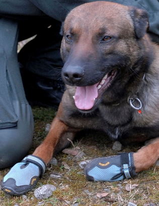 A police officer puts on shoes for his dog in this undated photo ...