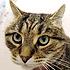 Feline origins